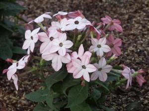 schattig, bloemen