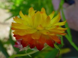 fiery, paper, daisy