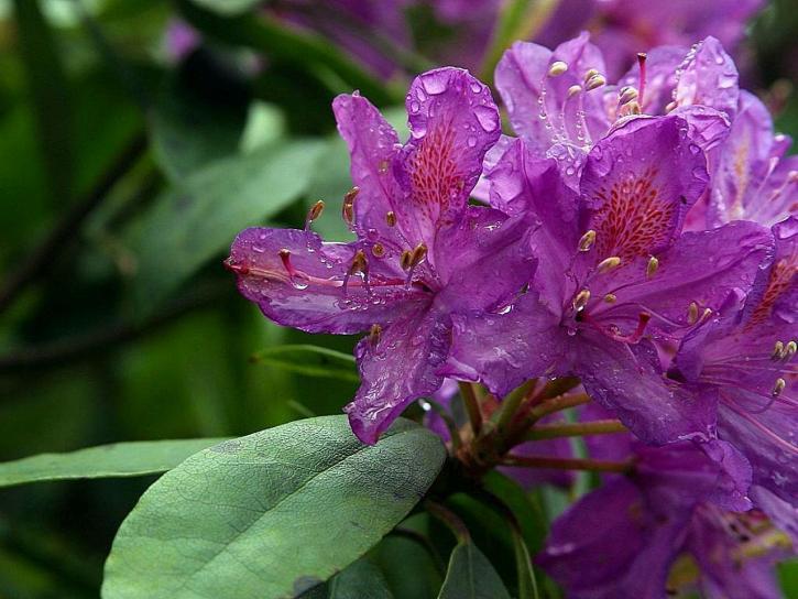 deerpark, ireland, flowers