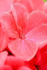 détails, fleur