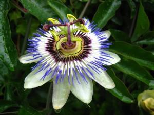 exotic, flower