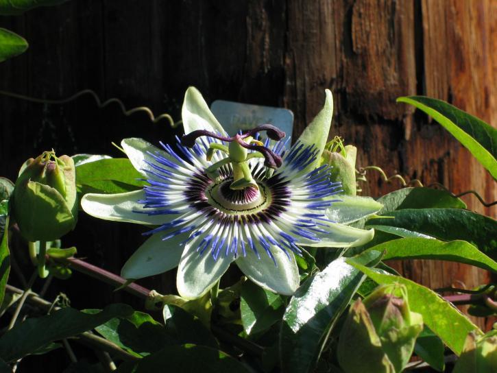 exotic, rainforest, flower