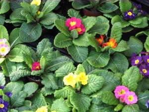 fleur, de près, belle, fleur