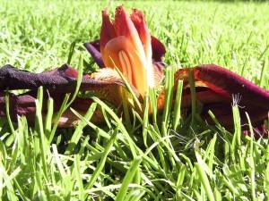 flower, grass