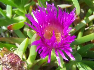 flower, spring, grass