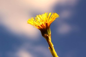 yellow flower, macro, up-close, flowering, sky