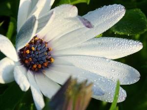 flower, macro, park