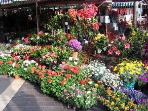flower, market