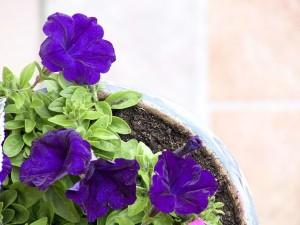 flower, purple, plant