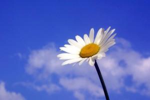 çiçek, hazır, fotoğraf