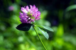 flower, wild, forest