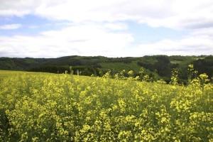 fleurs, jaune, sauvage, fleurs, nature, réserve
