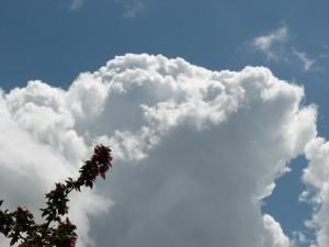 flowers, sky