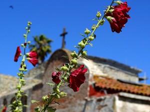 flowers, Juan, Capistrano