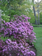 цветя, Блум, парк