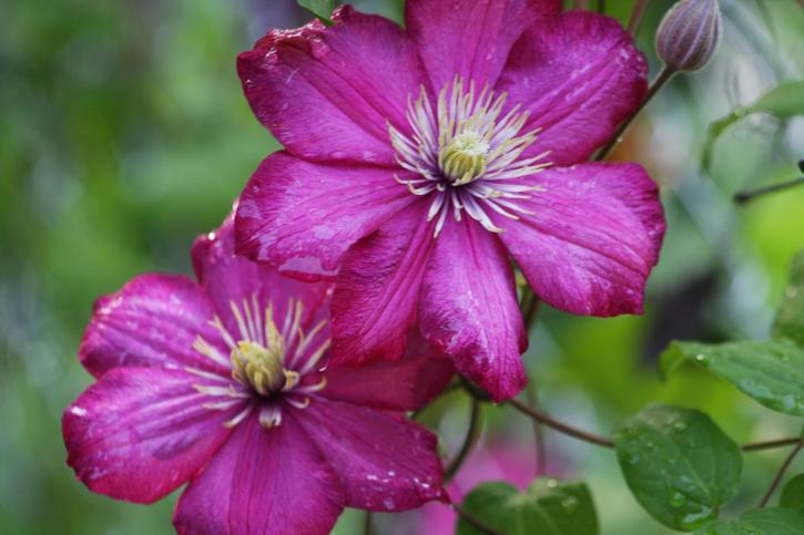 цветя, цъфтящи