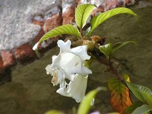 цветя, тухли, листа