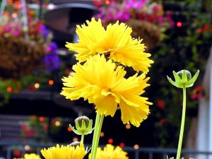 cvijeće, pupoljci, stabljika