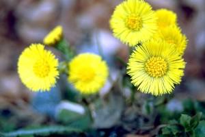 flowers, growing