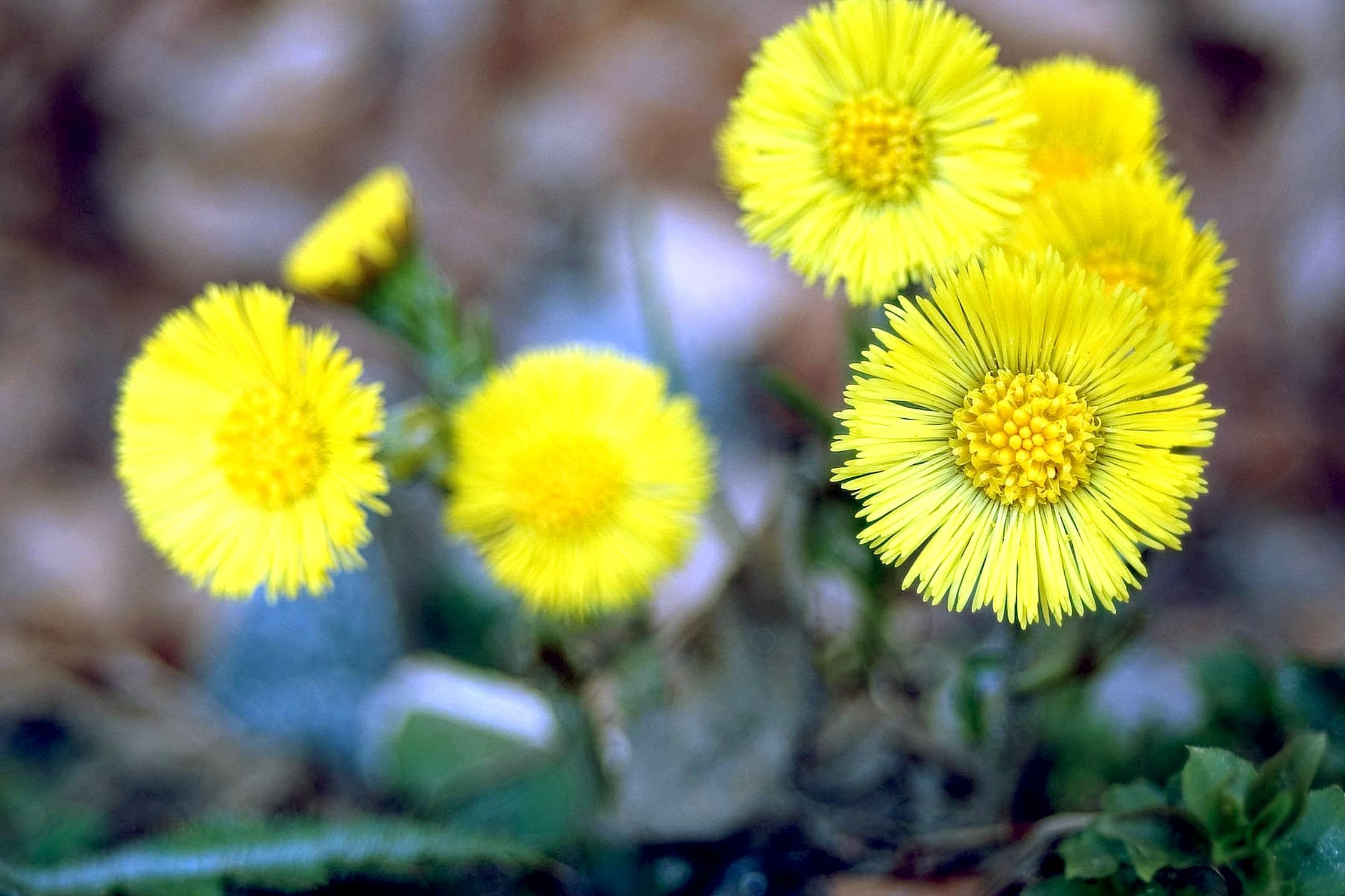 37 best Mellow Yellow images on Pinterest | Yellow, Color yellow ...