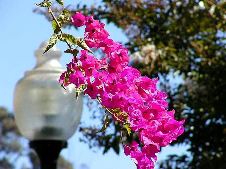 flowers, lamps, posts, lights