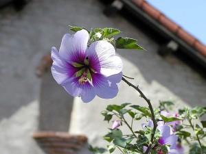 fleurs, des missions, des feuilles, des feuilles, des toits
