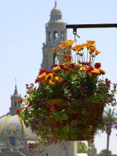 flowers, planters, domes, towers