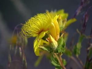 flowers, plants, grass, macro