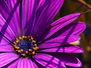 blommor, pollen, lila