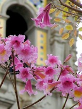flowers, towers, petals, arches, leaf, leaves