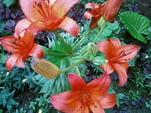 garden, up-close, light orange flowers