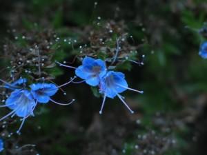 herbe, fleurs