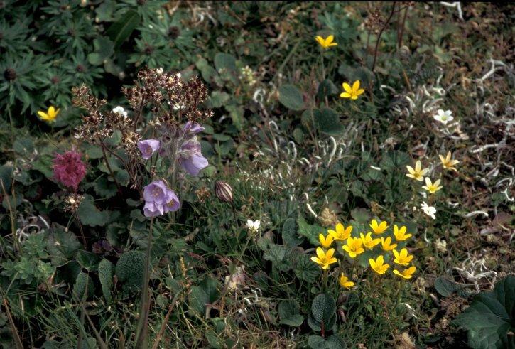 hall, island, wildflowers