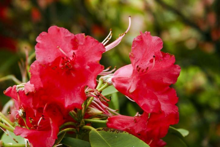intéressant, fleuri, fleur rouge