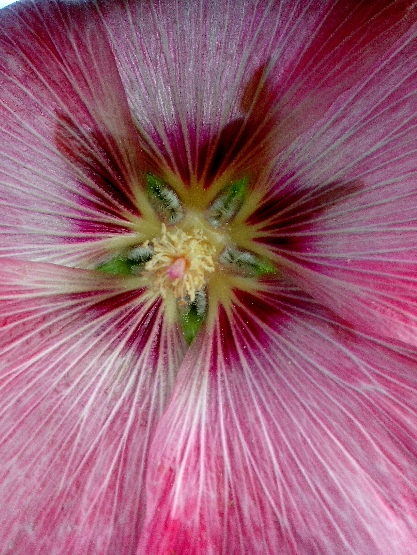 Free photograph; interior, pink, flower