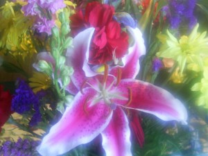 lily, flowers, assortment