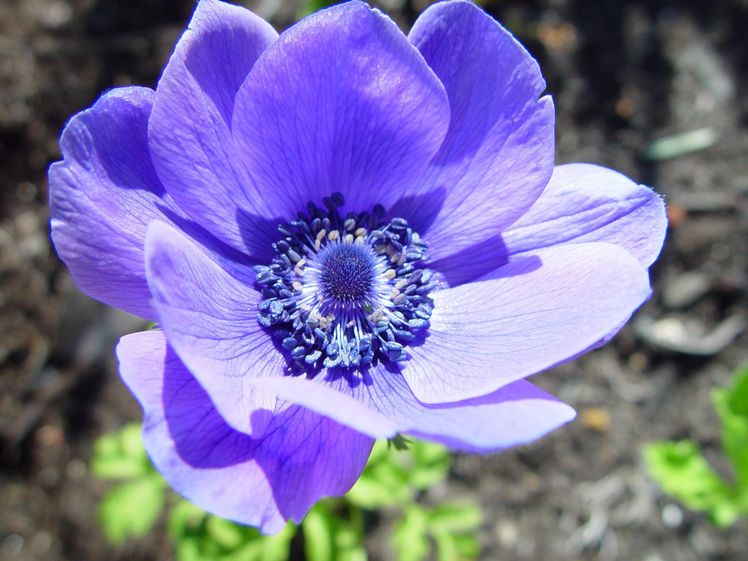 фото цветов маленьких размеров