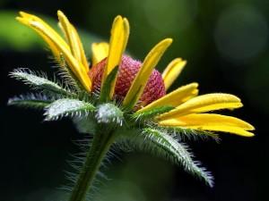 macro, flowers, petals