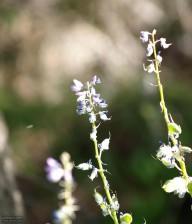berg, blomma, gratis, bild