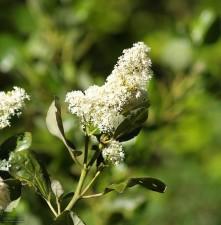 montagne, fleur, fleur blanche