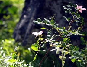 mountain, green, flower