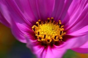 nectar, flower