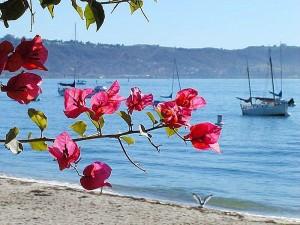 océan, fleurs, l'eau, des bateaux, des plages