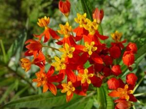 orange, fleurs jaunes