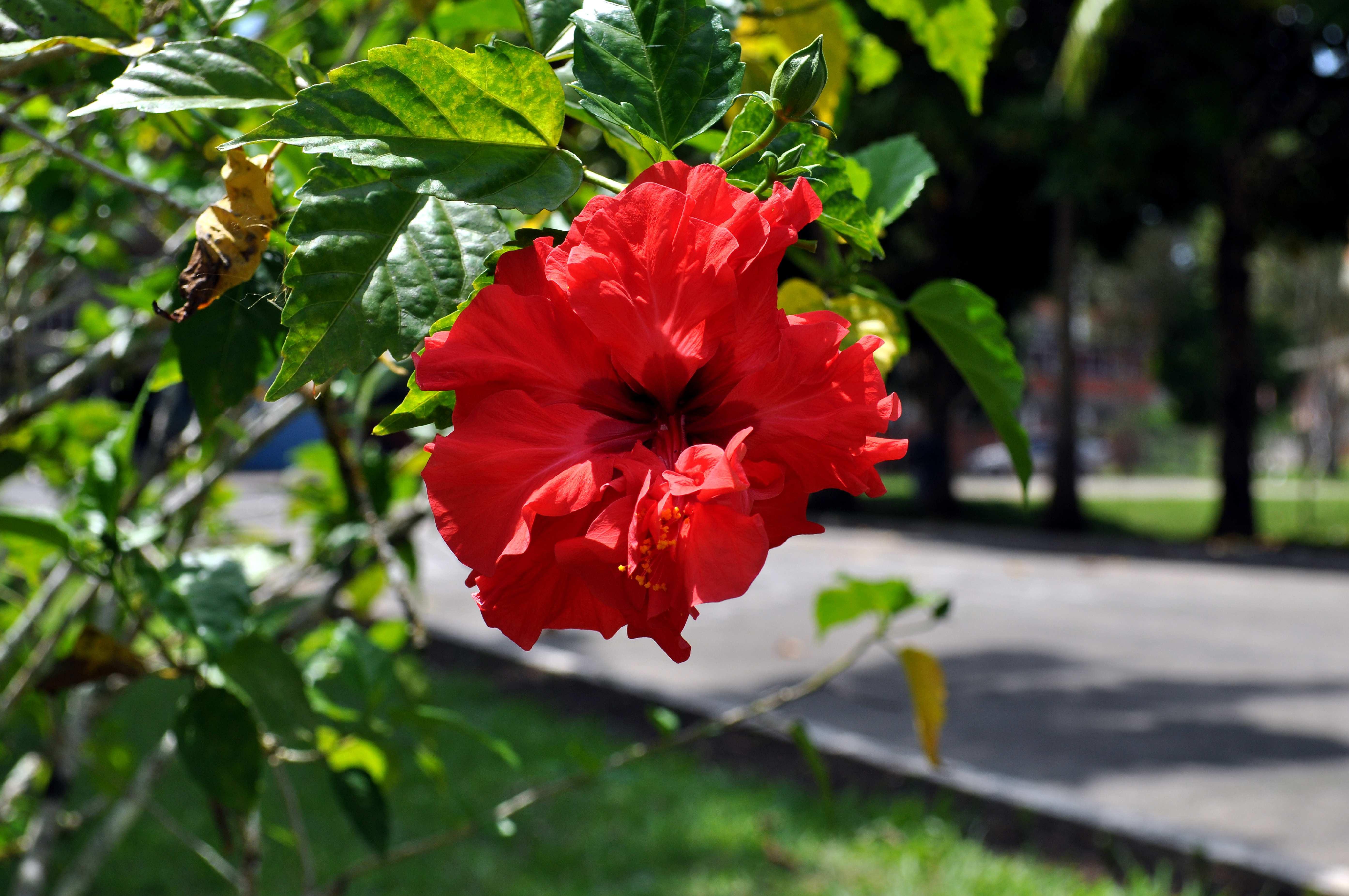 Free photograph; orange, blossom, park