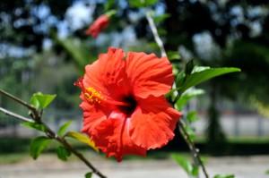 orange, fleur, fleur rouge, jaune, pistil