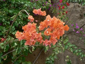 orange, colored flowers