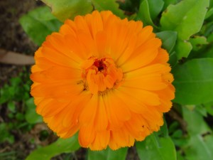 orange flowering, flora