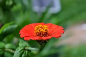 orange, petals, flower, nectar