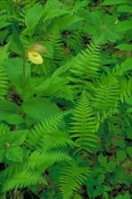 light, yellow, orchid, bright green, ferns
